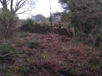 Clearing the furze